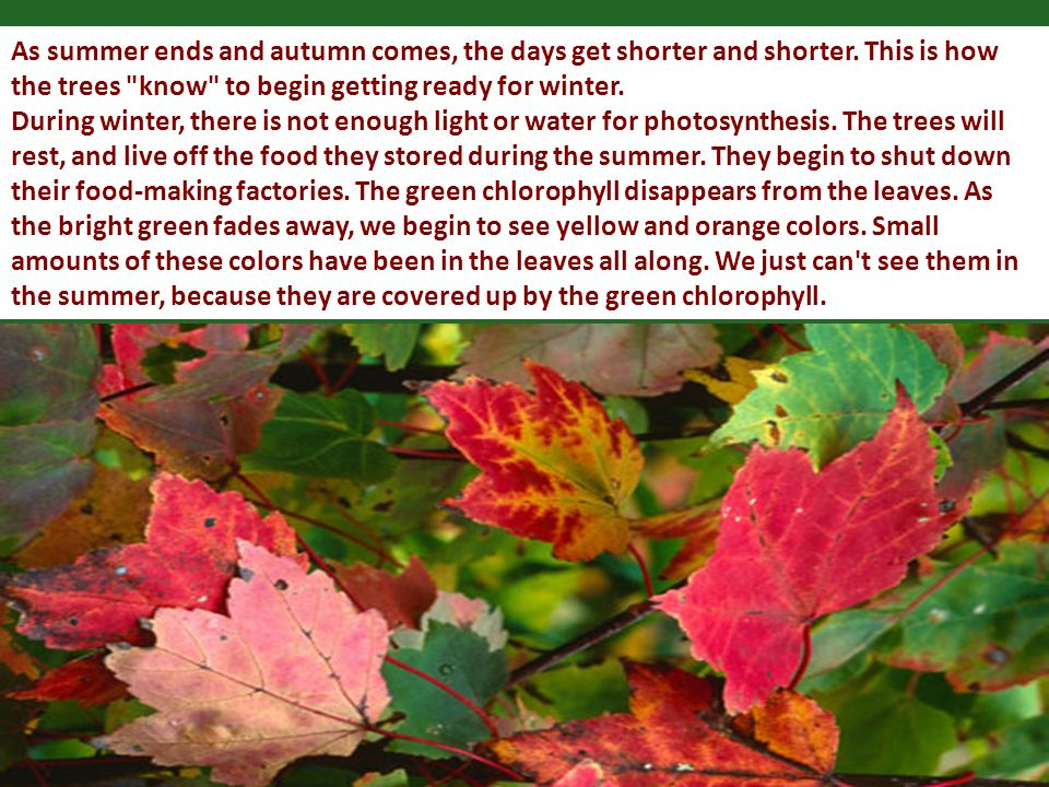 As summer ends and autumn comes, the days get shorter and shorter