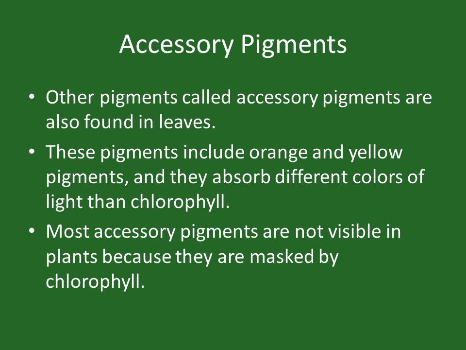 Accessory Pigments Other pigments called accessory pigments are also found in leaves.