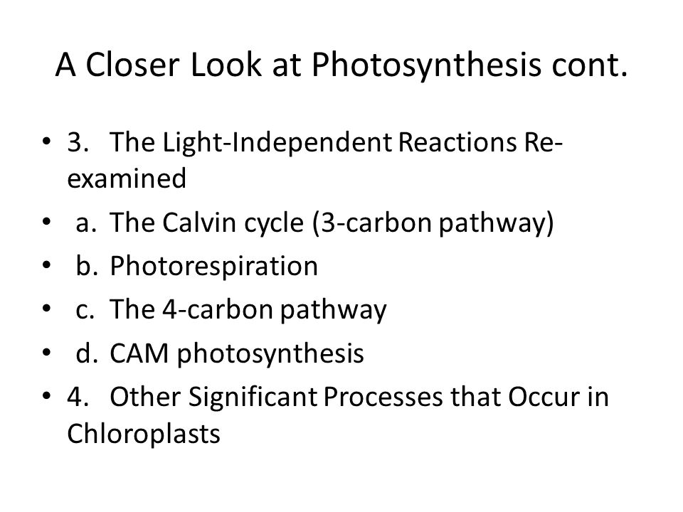 A Closer Look at Photosynthesis cont.