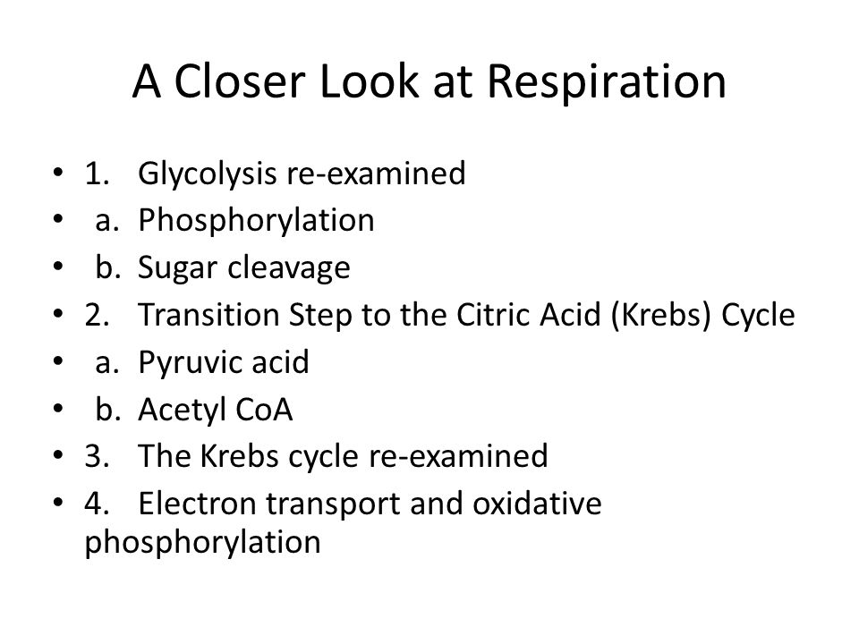 A Closer Look at Respiration