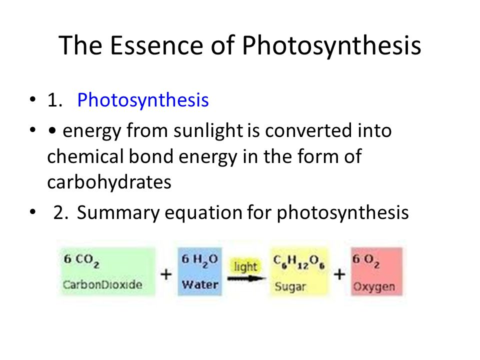 The Essence of Photosynthesis