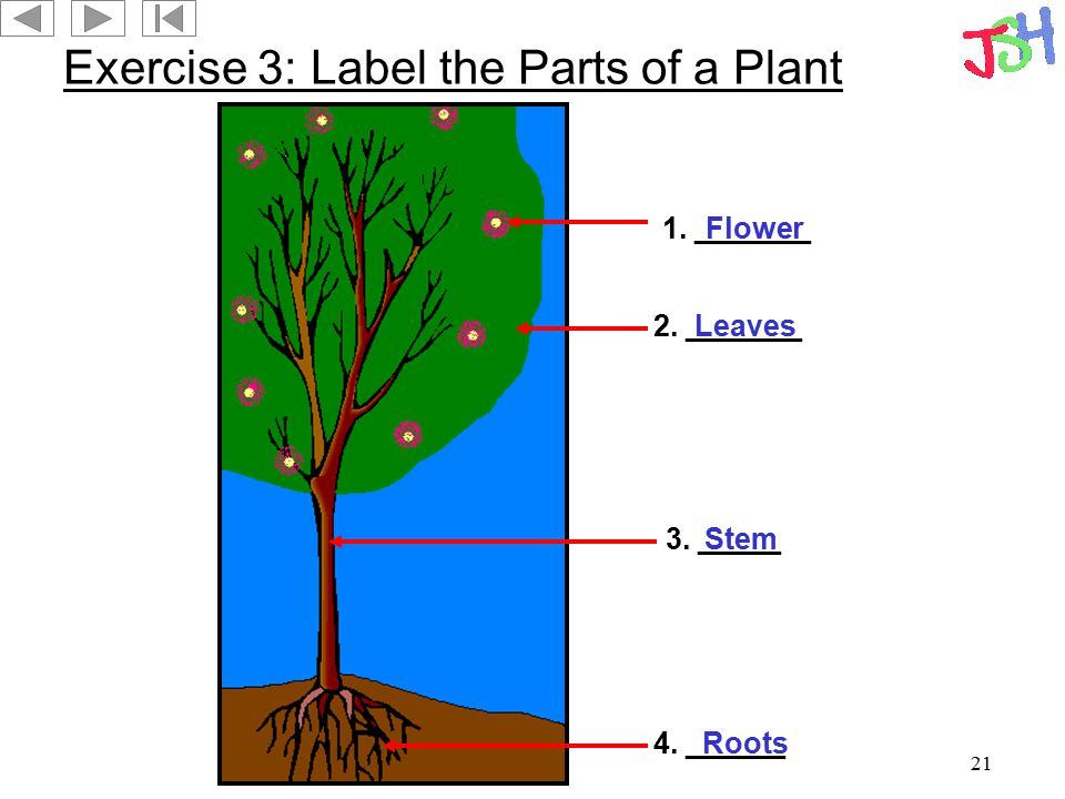 Exercise 3: Label the Parts of a Plant