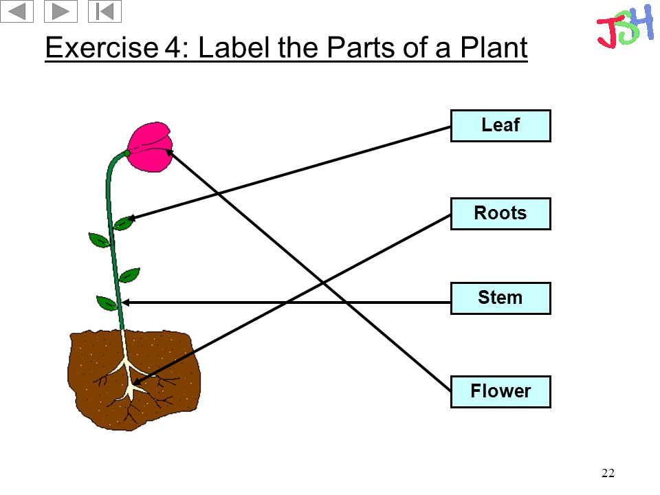 Exercise 4: Label the Parts of a Plant