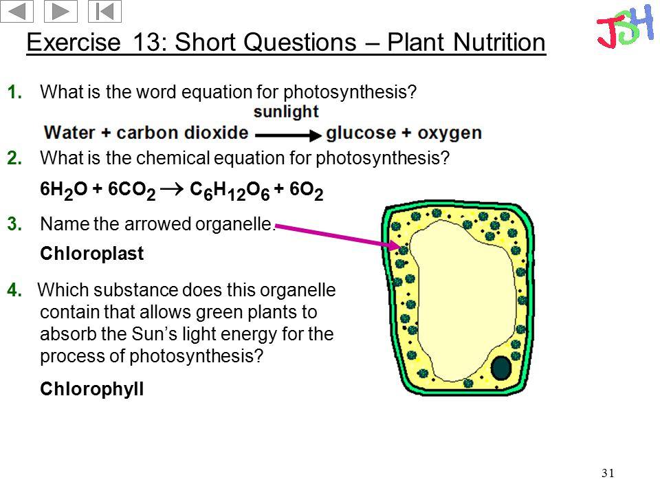Exercise 13: Short Questions – Plant Nutrition