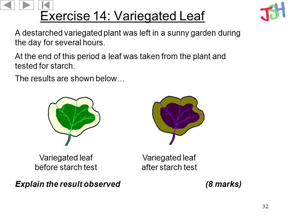 Exercise 14: Variegated Leaf