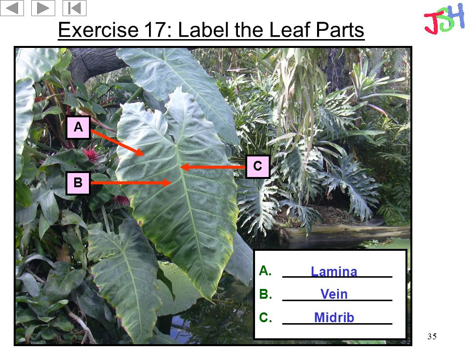 Exercise 17: Label the Leaf Parts