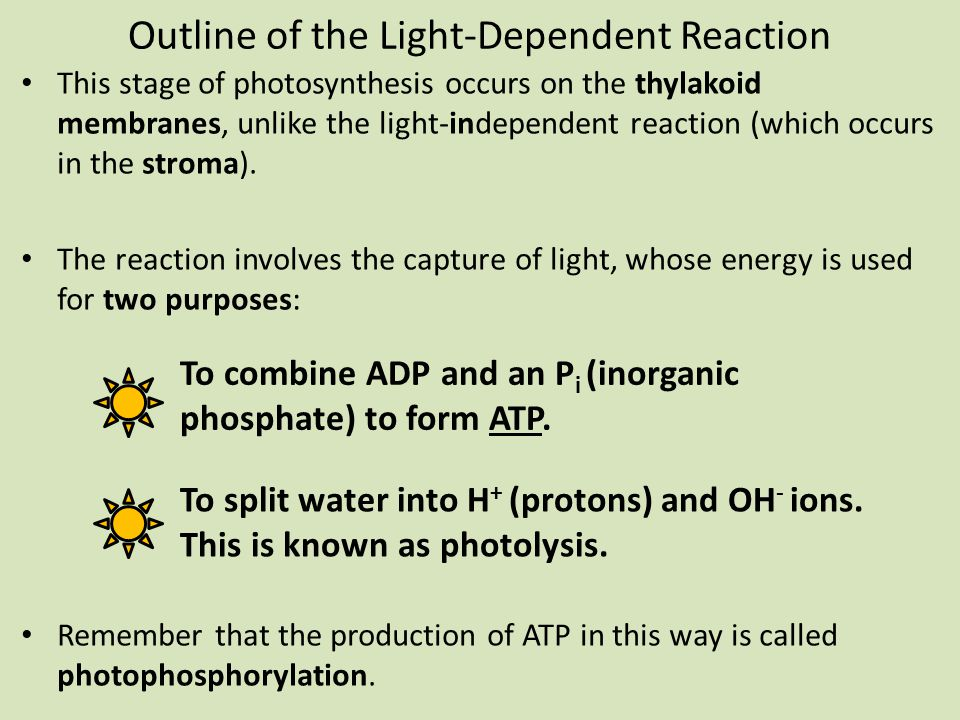 Outline of the Light-Dependent Reaction