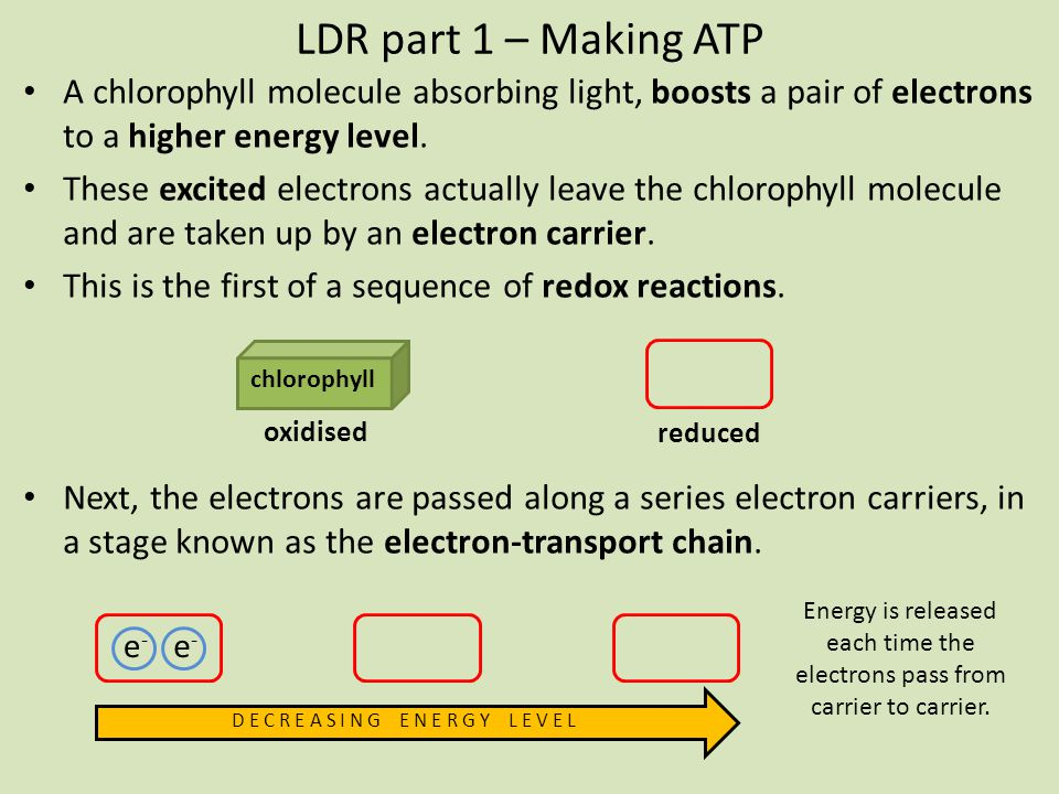 LDR part 1 – Making ATP A chlorophyll molecule absorbing light, boosts a pair of electrons to a higher energy level.