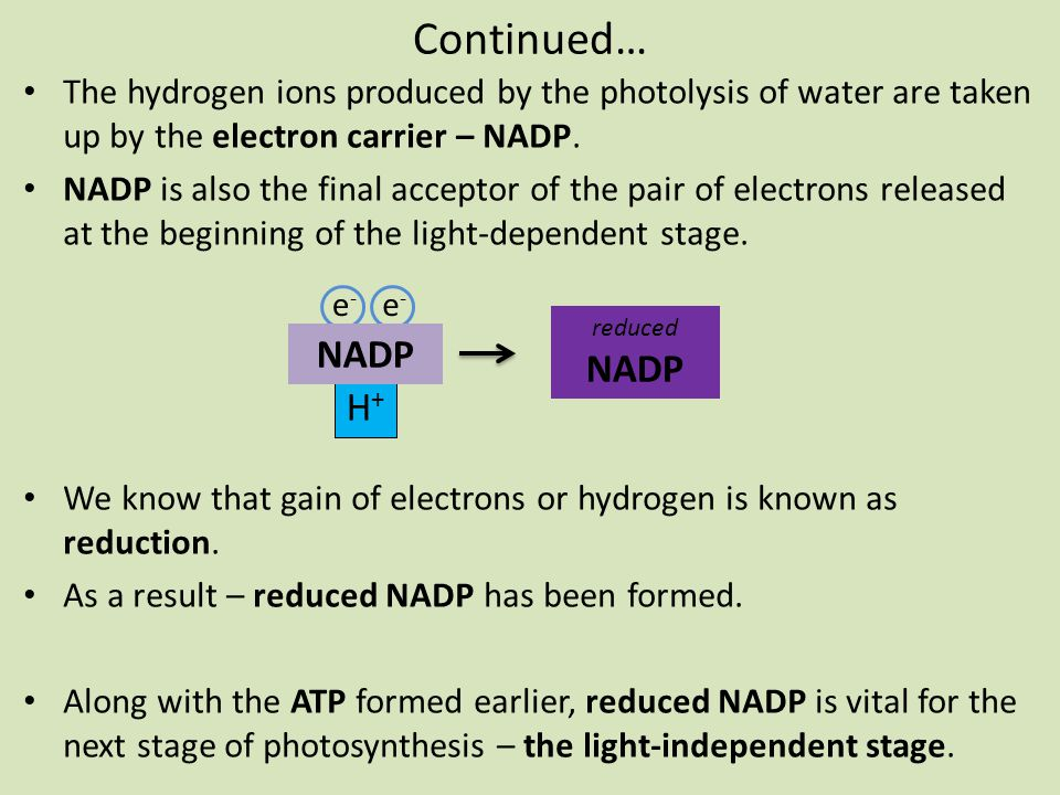 Continued… NADP NADP H+