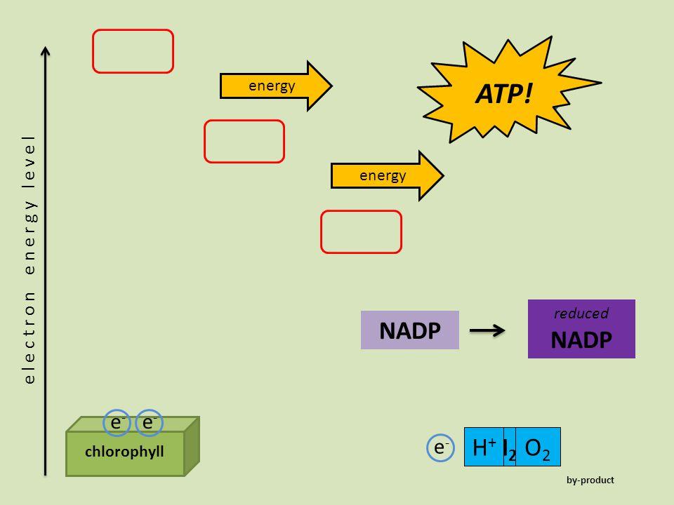 ATP! ADP Pi NADP NADP H+ H2O O2 e- e- e-
