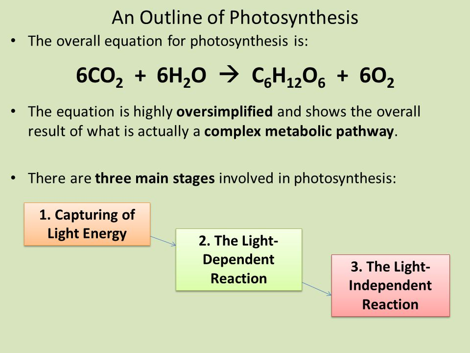 An Outline of Photosynthesis