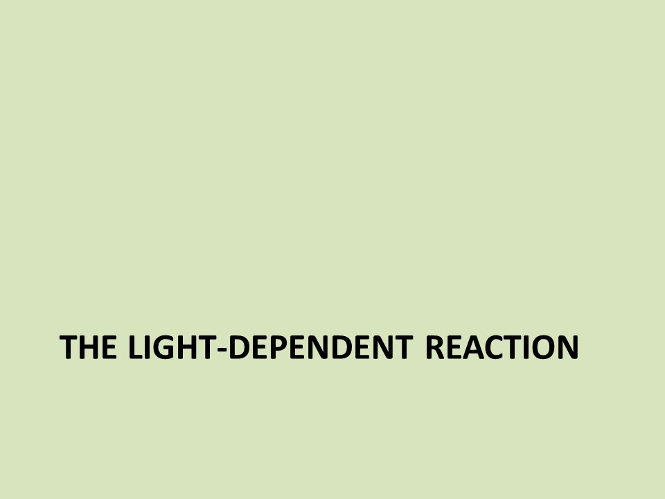 The light-dependent reaction
