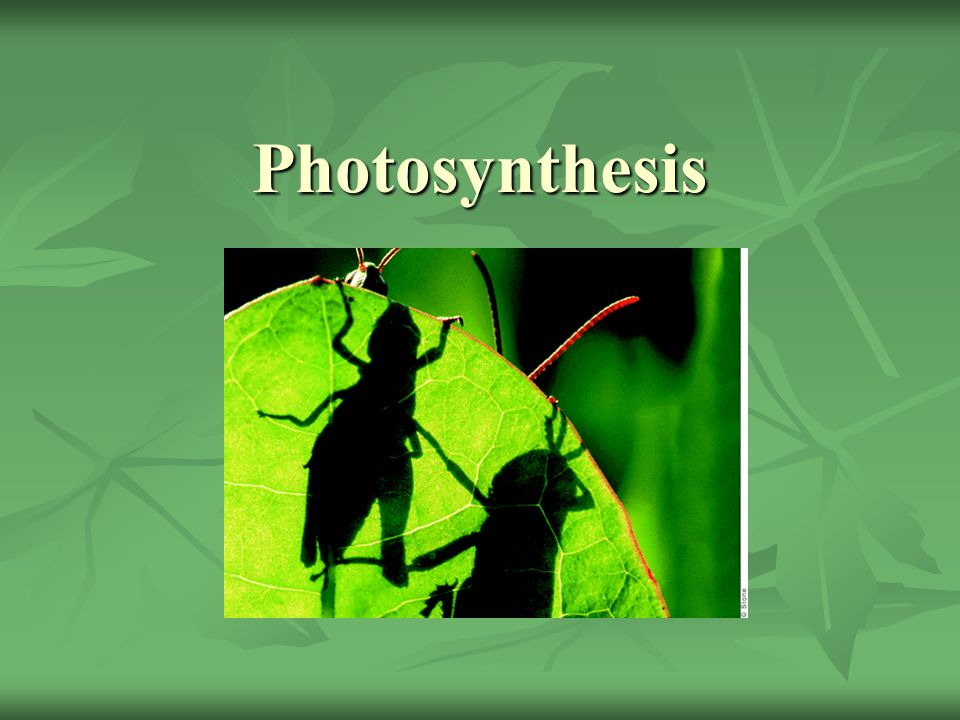 Photosynthesis **** Mention chemosynthesis somewhere bc its in AP bio
