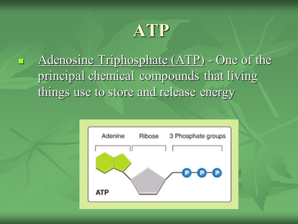 ATP Adenosine Triphosphate (ATP) - One of the principal chemical compounds that living things use to store and release energy.