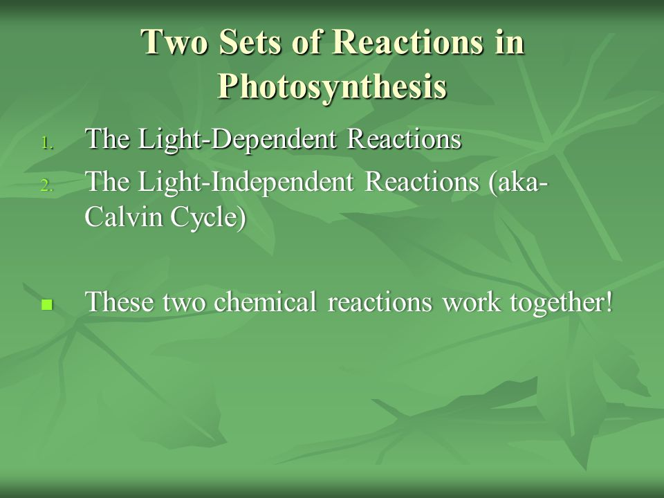 Two Sets of Reactions in Photosynthesis