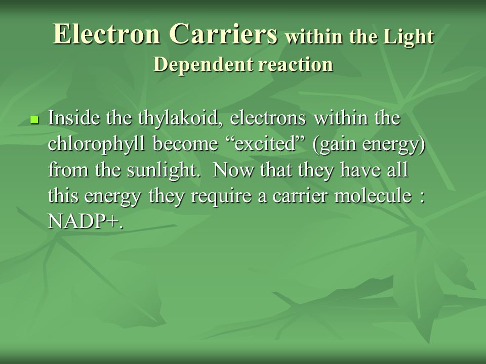 Electron Carriers within the Light Dependent reaction