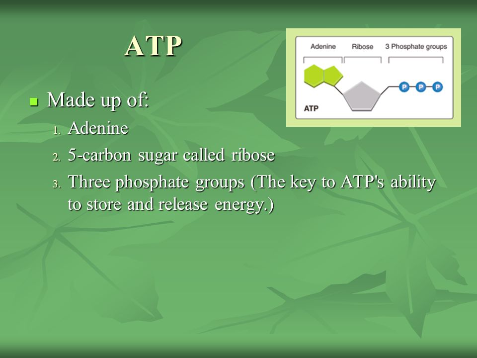 ATP Made up of: Adenine 5-carbon sugar called ribose