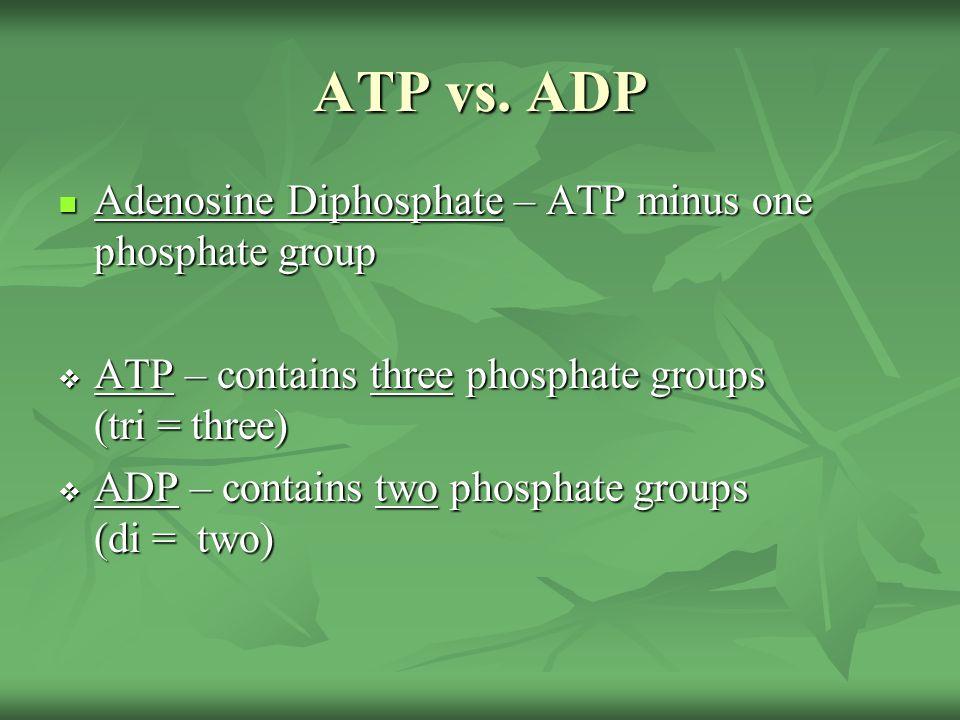 ATP vs. ADP Adenosine Diphosphate – ATP minus one phosphate group