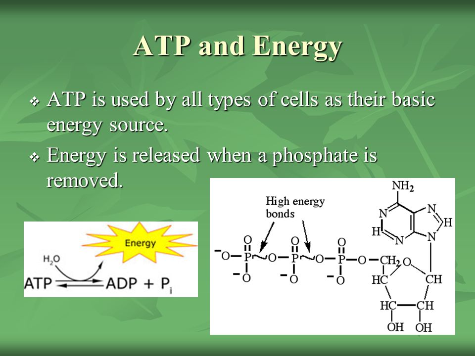 ATP and Energy ATP is used by all types of cells as their basic energy source.
