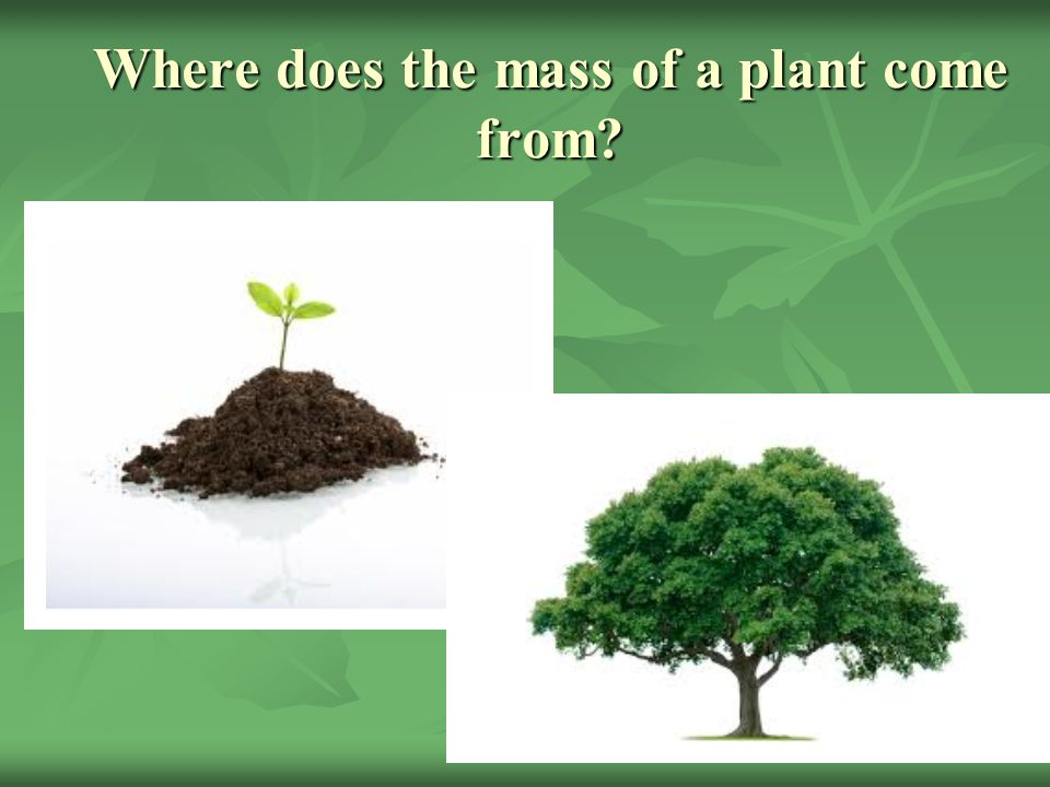 Where does the mass of a plant come from
