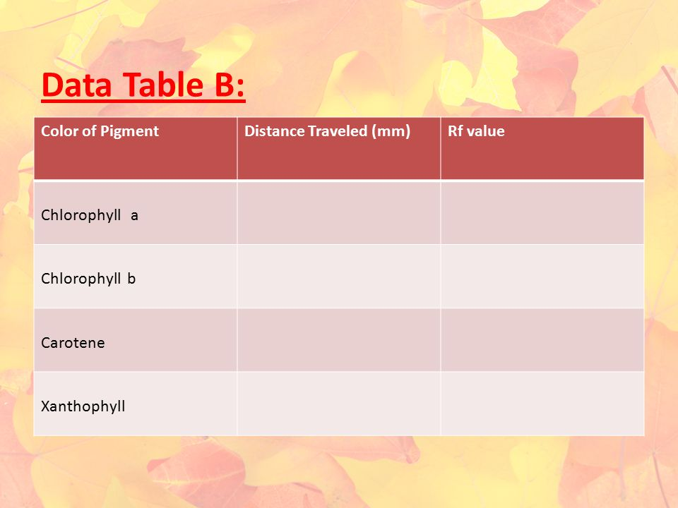 Data Table B: Color of Pigment Distance Traveled (mm) Rf value