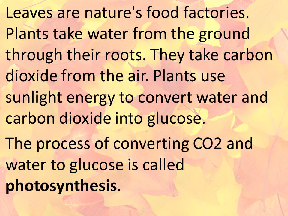 Leaves are nature s food factories