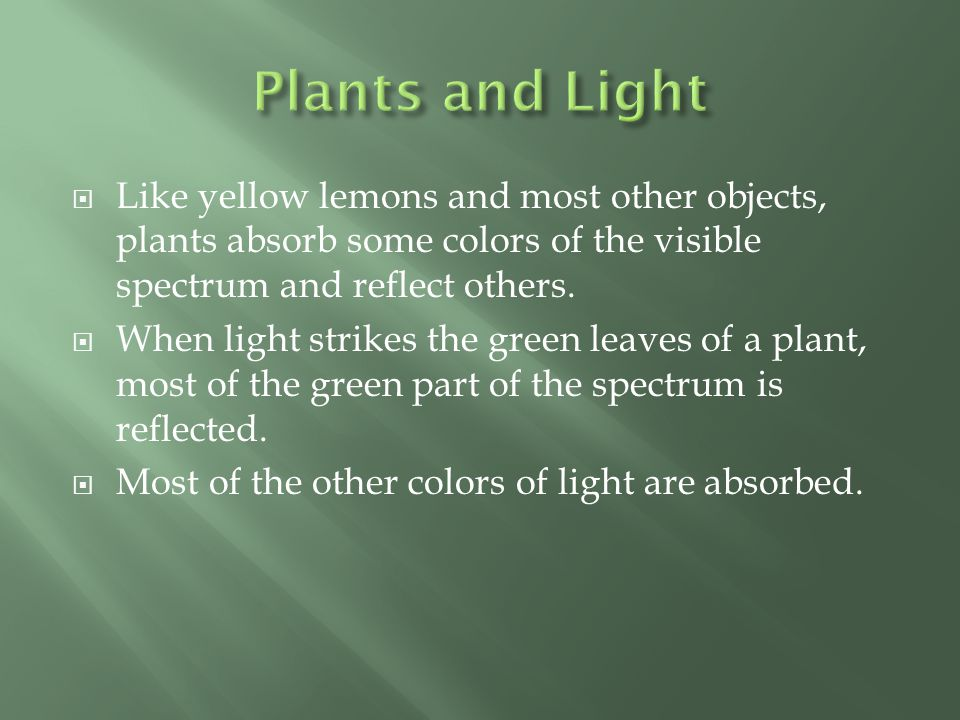 Plants and Light Like yellow lemons and most other objects, plants absorb some colors of the visible spectrum and reflect others.