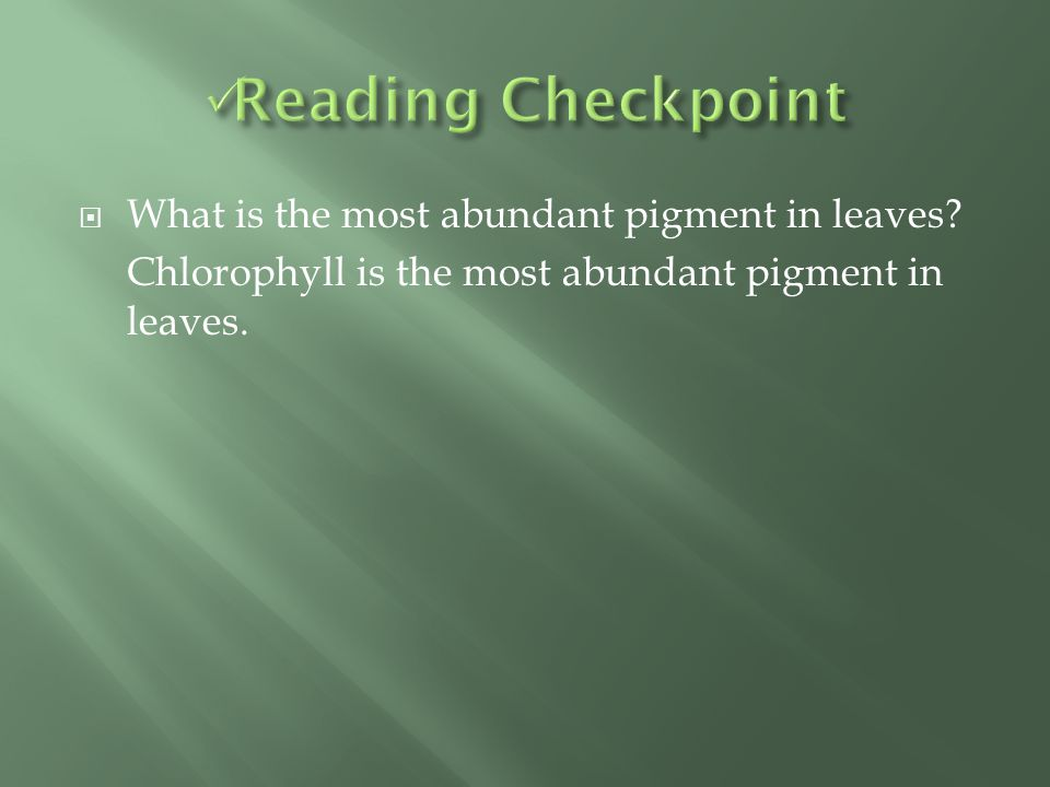 Reading Checkpoint What is the most abundant pigment in leaves