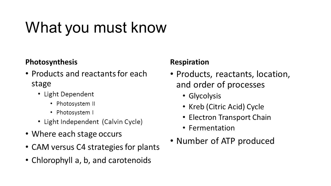 What you must know Photosynthesis. Respiration. Products and reactants for each stage. Light Dependent.