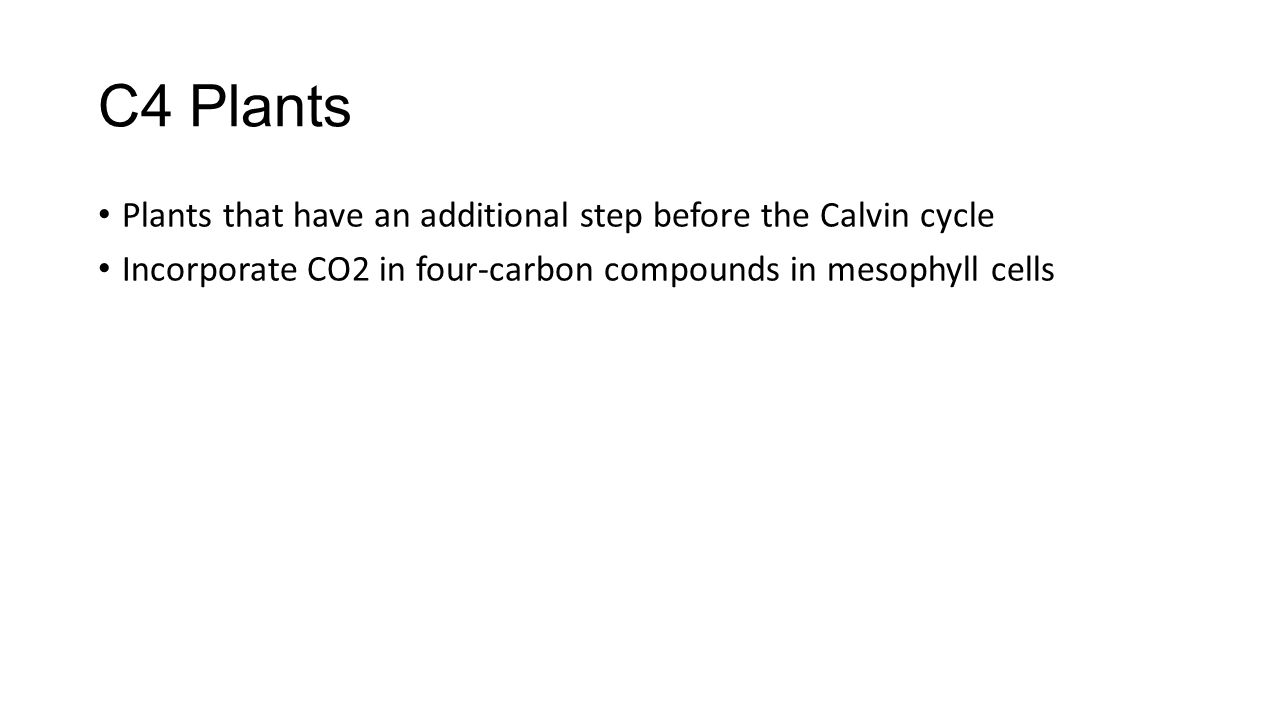 C4 Plants Plants that have an additional step before the Calvin cycle