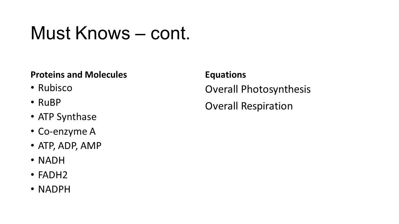 Must Knows – cont. Overall Photosynthesis Overall Respiration Rubisco