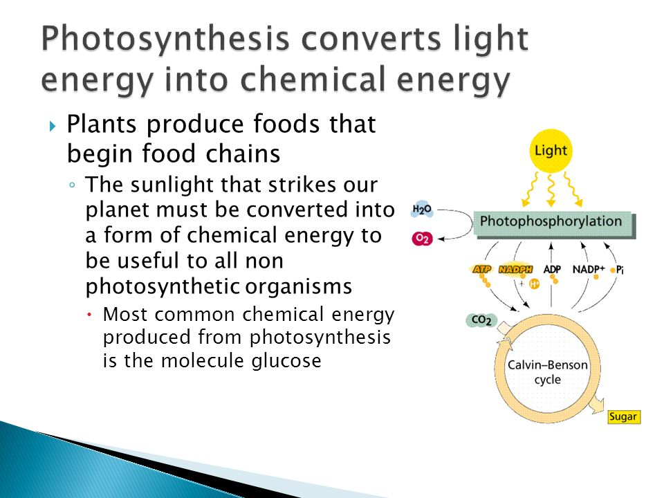 Photosynthesis converts light energy into chemical energy