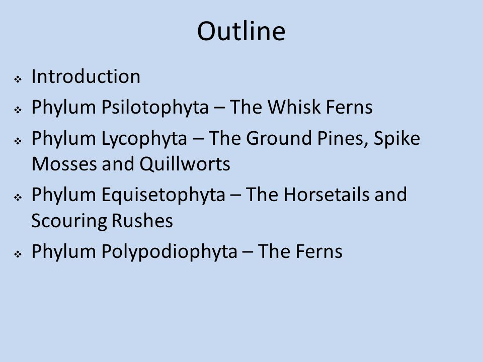 Outline Introduction Phylum Psilotophyta – The Whisk Ferns
