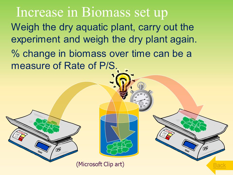 Increase in Biomass set up
