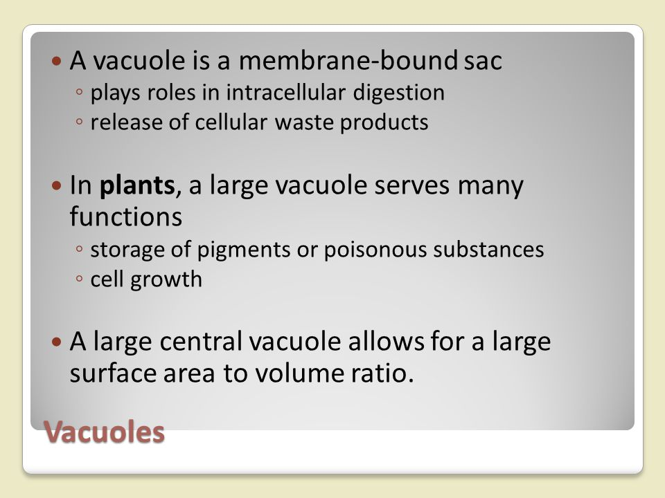 Vacuoles A vacuole is a membrane-bound sac