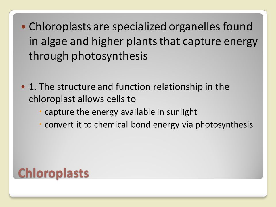 Chloroplasts are specialized organelles found in algae and higher plants that capture energy through photosynthesis
