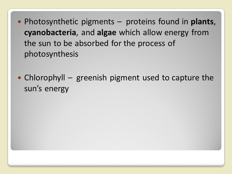 Photosynthetic pigments – proteins found in plants, cyanobacteria, and algae which allow energy from the sun to be absorbed for the process of photosynthesis