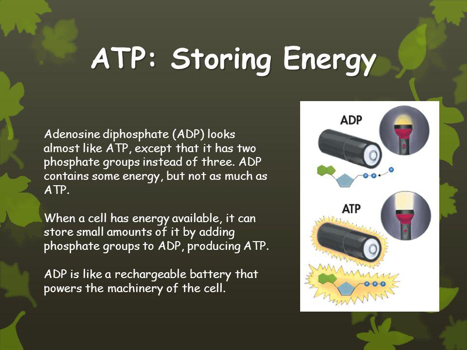 ATP: Storing Energy