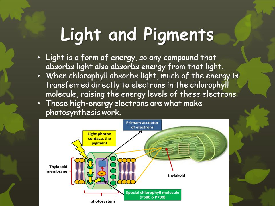 Light and Pigments Light is a form of energy, so any compound that absorbs light also absorbs energy from that light.
