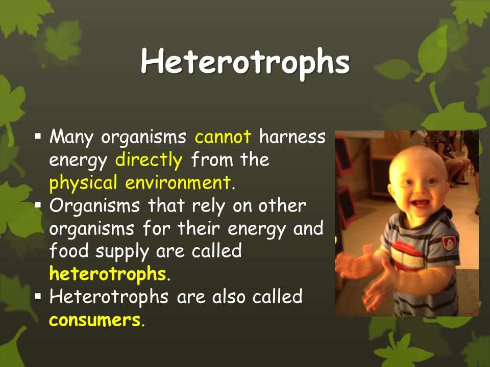 Heterotrophs Many organisms cannot harness energy directly from the physical environment.