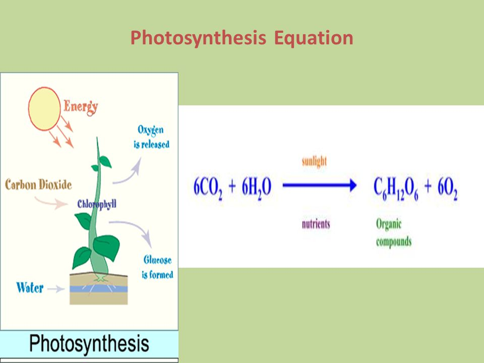phtosynthesis equation Listing all reactants and products, photosynthesis can be describedas: 6 co2 + 12 h2o →c6h12o6 + 6 o2 + 6h2o but because water is both a reactant.