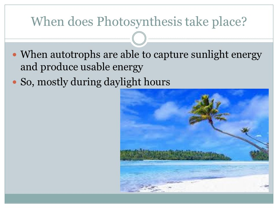 When does Photosynthesis take place