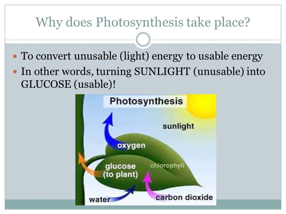 Why does Photosynthesis take place