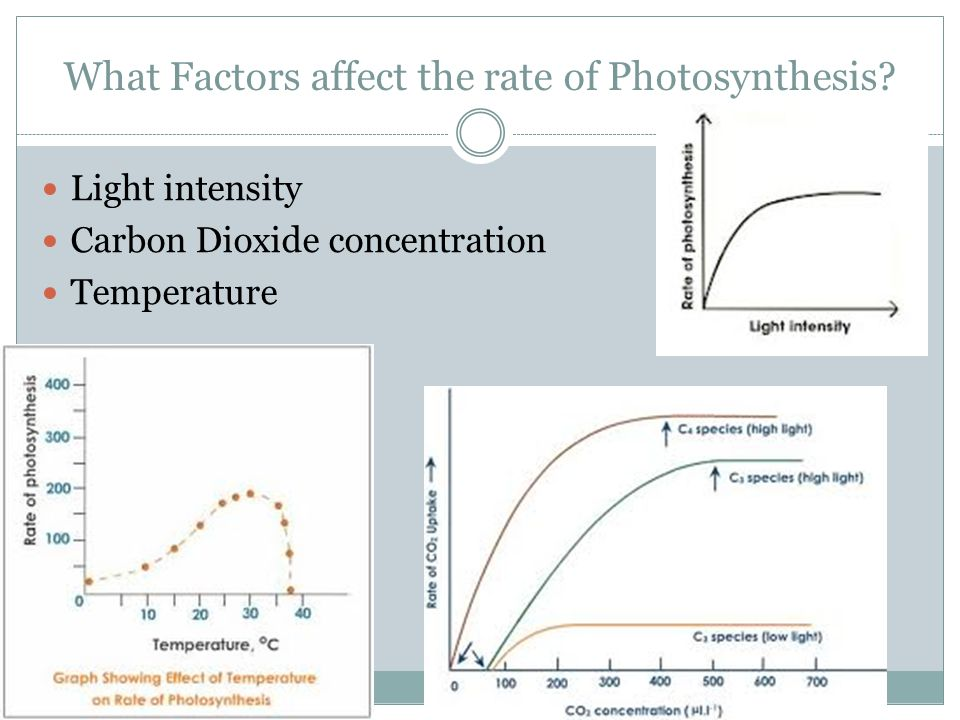 What Factors affect the rate of Photosynthesis