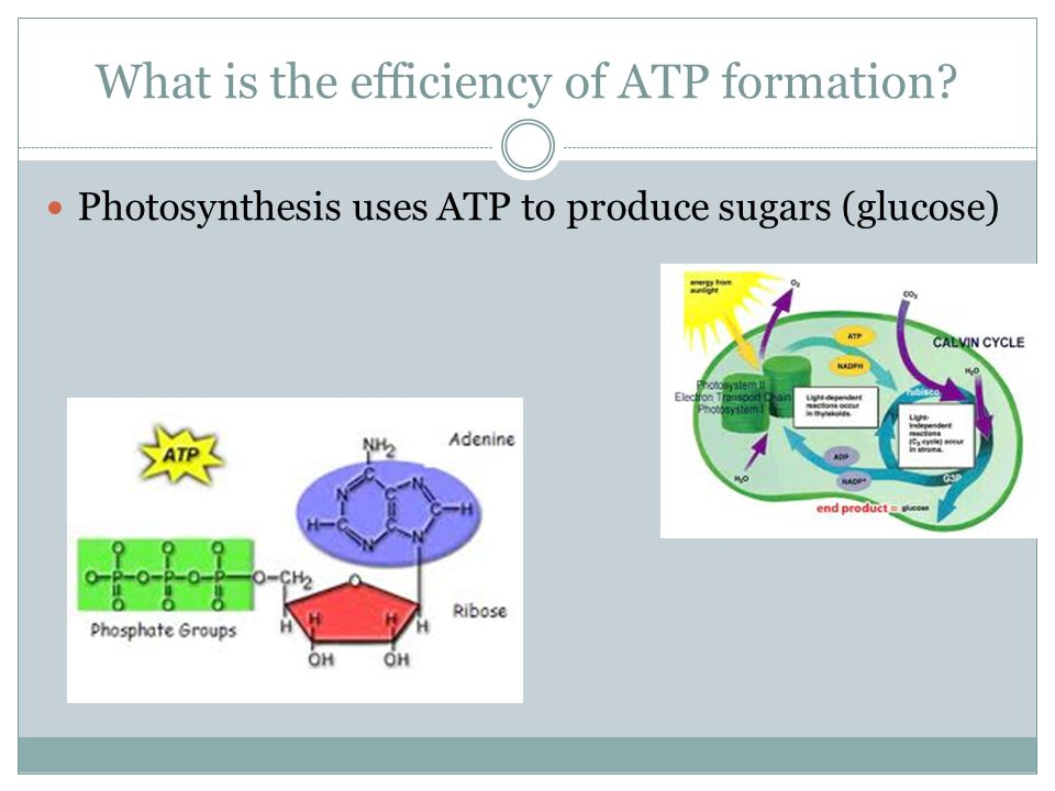 What is the efficiency of ATP formation