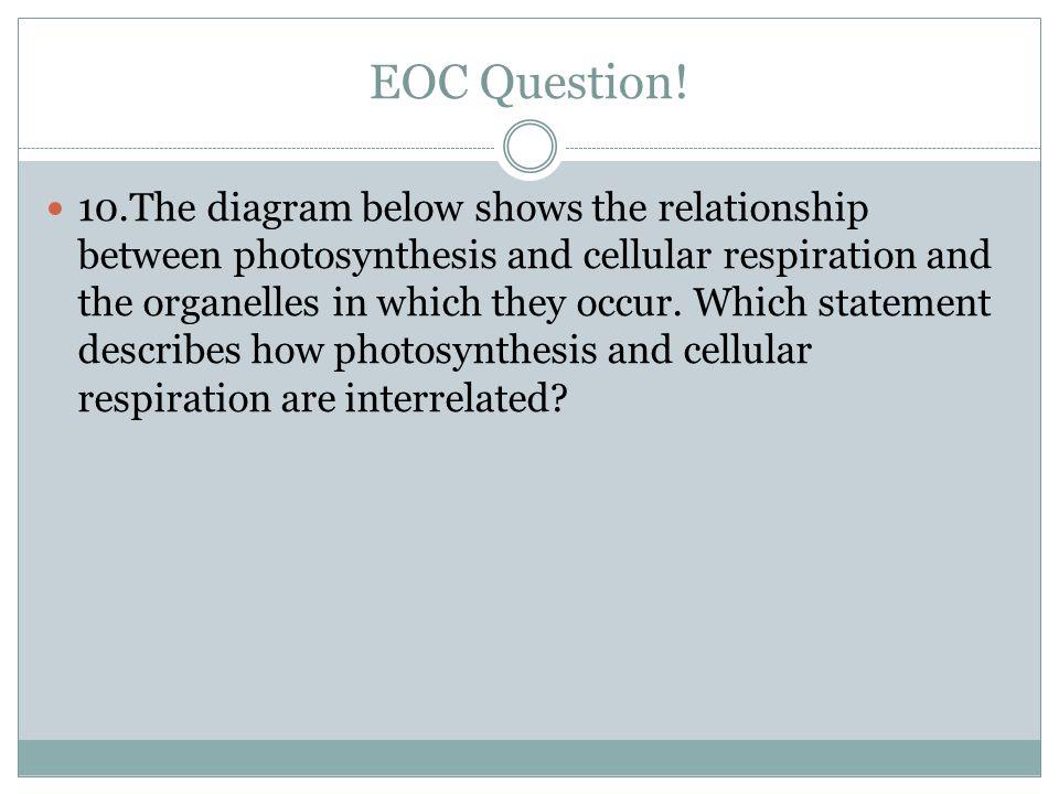 EOC Question!