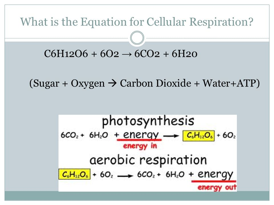 What is the Equation for Cellular Respiration
