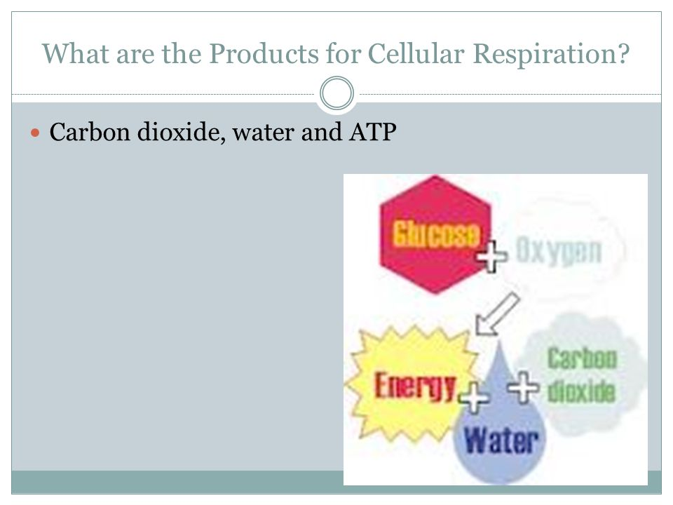 What are the Products for Cellular Respiration