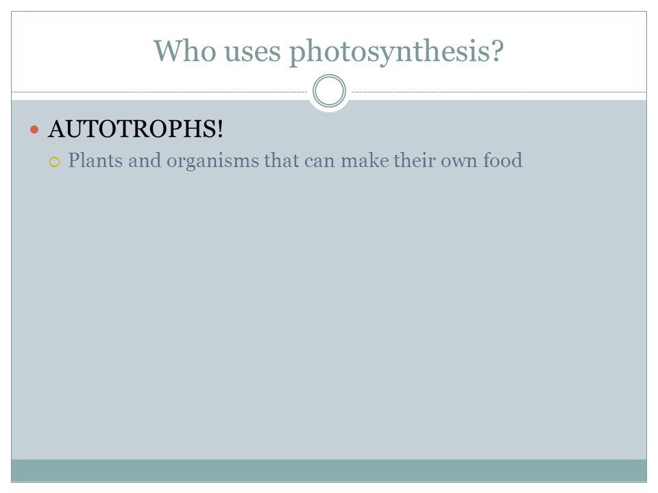 Who uses photosynthesis