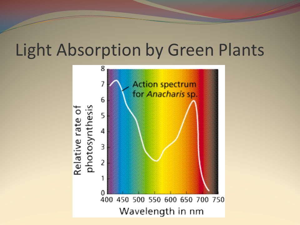 Light Absorption by Green Plants